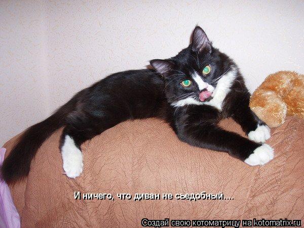 Котоматрица: И ничего, что диван не сьедобный....