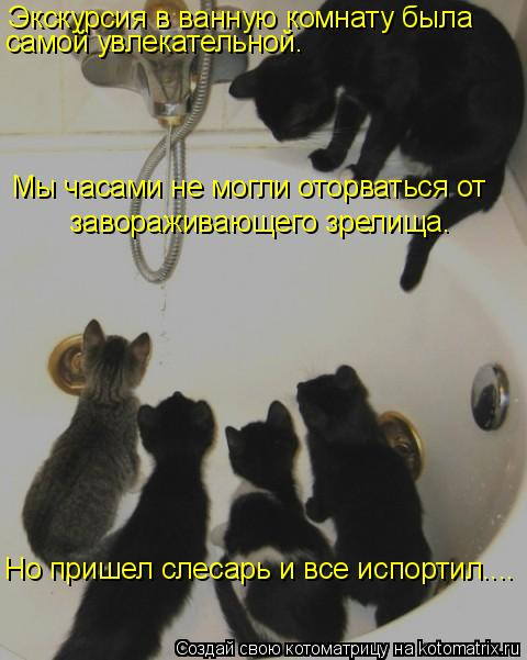 Котоматрица: Экскурсия в ванную комнату была  Но пришел слесарь и все испортил…... самой увлекательной. Мы часами не могли оторваться от   завораживающег