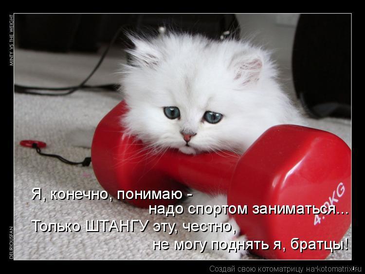Котоматрица: Я, конечно, понимаю -  надо спортом заниматься... Только ШТАНГУ эту, честно, не могу поднять я, братцы!