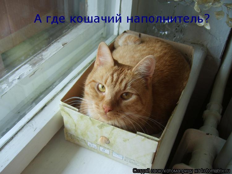 Котоматрица: А где кошачий наполнитель?