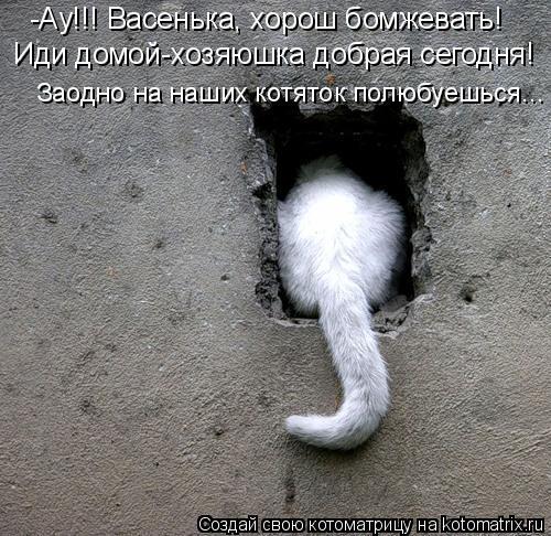 Котоматрица: -Ау!!! Васенька, хорош бомжевать!  Иди домой-хозяюшка добрая сегодня! Заодно на наших котяток полюбуешься...