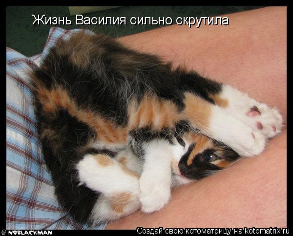 Котоматрица: Жизнь Василия сильно скрутила  Жизнь Василия сильно скрутила