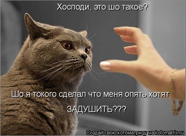 Котоматрица: Хосподи, это шо такое? Шо я токого сделал что меня опять хотят задушить??? Шо я токого сделал что меня опять хотят ЗАДУШИТЬ???