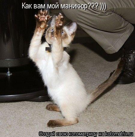 Котоматрица: Как вам мой маникюр??? )))