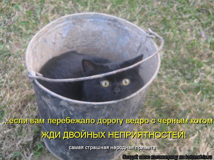 Котоматрица: ...если вам перебежало дорогу ведро с черным котом, ЖДИ ДВОЙНЫХ НЕПРИЯТНОСТЕЙ! самая страшная народная примета