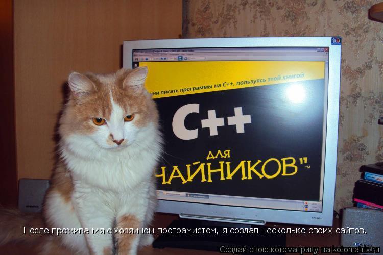 Котоматрица: После проживания с хозяином програмистом, я создал несколько своих сайтов.