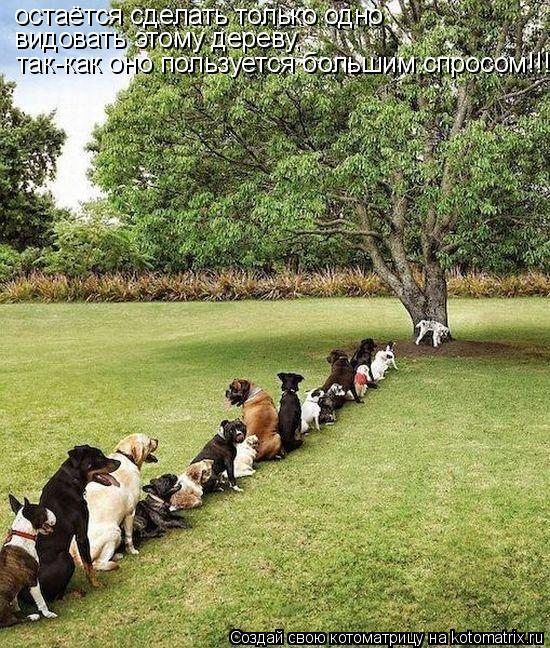 Котоматрица: остаётся сделать только одно видовать этому дереву, так-как оно пользуется большим спросом!!!