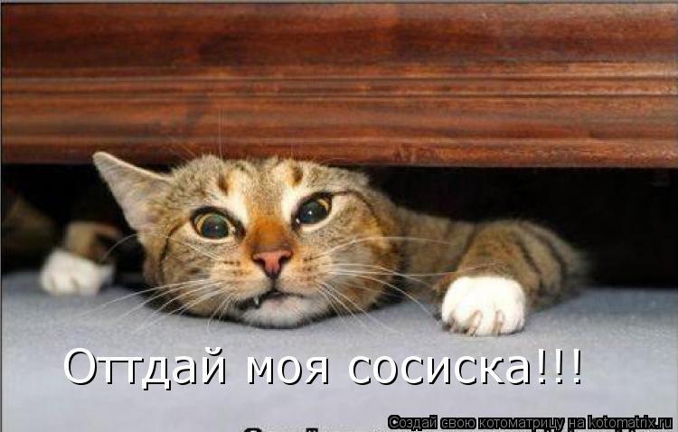 Котоматрица: Оттдай моя сосиска!!!