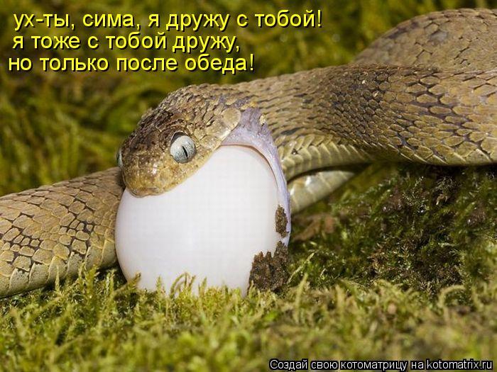 Котоматрица: ух-ты, сима, я дружу с тобой! я тоже с тобой дружу, но только после обеда!