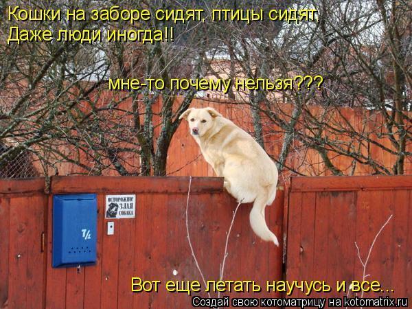 Котоматрица: Кошки на заборе сидят, птицы сидят, Даже люди иногда!! мне-то почему нельзя??? Вот еще летать научусь и все...