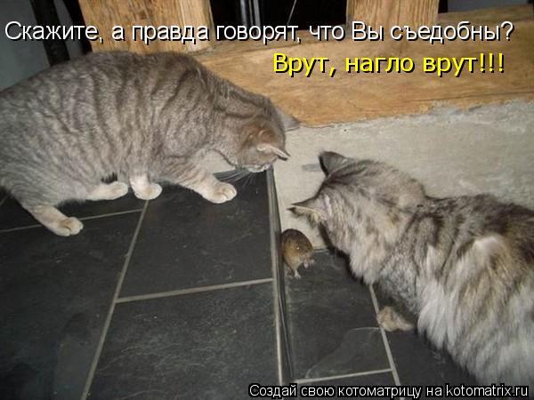 Котоматрица: Скажите, а правда говорят, что Вы съедобны? Врут, нагло врут!!!