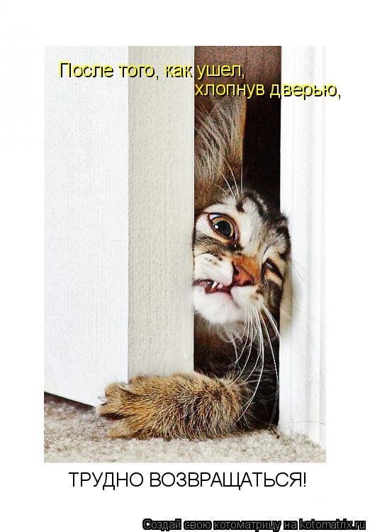Котоматрица: После того, как ушел, хлопнув дверью,  ТРУДНО ВОЗВРАЩАТЬСЯ!