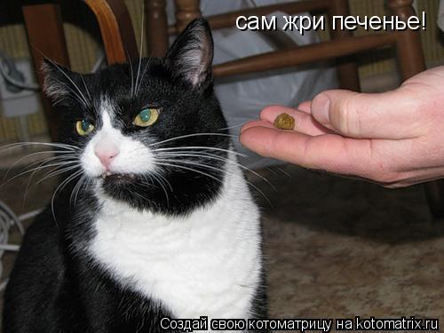 Котоматрица: сам жри печенье!