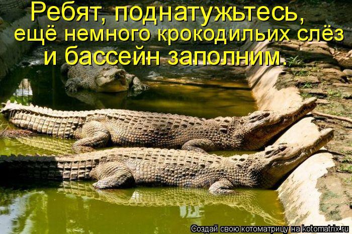 Котоматрица: Ребят, поднатужьтесь,  ещё немного крокодильих слёз  и бассейн заполним.
