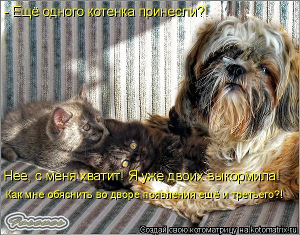 Котоматрица: - Ещё одного котенка принесли?! Нее, с меня хватит! Я уже двоих выкормила! Как мне обяснить во дворе появления ещё и третьего?!