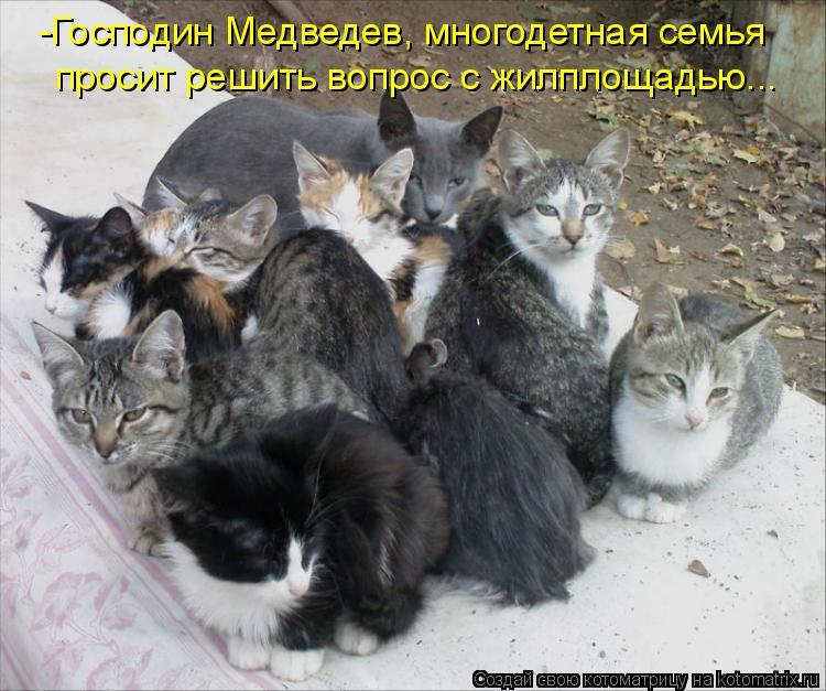 Котоматрица: -Господин Медведев, многодетная семья просит решить вопрос с жилплощадью...