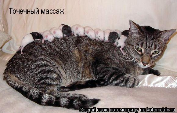 Котоматрица: Точечный массаж