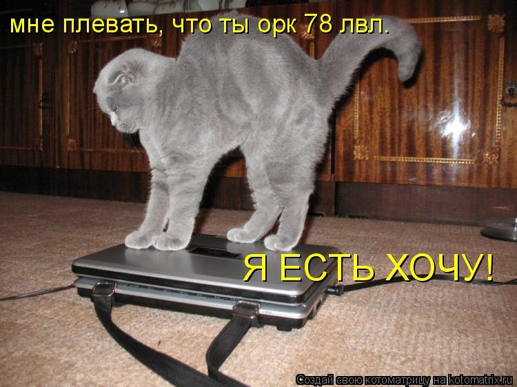 Котоматрица: мне плевать, что ты орк 78 лвл. Я ЕСТЬ ХОЧУ!