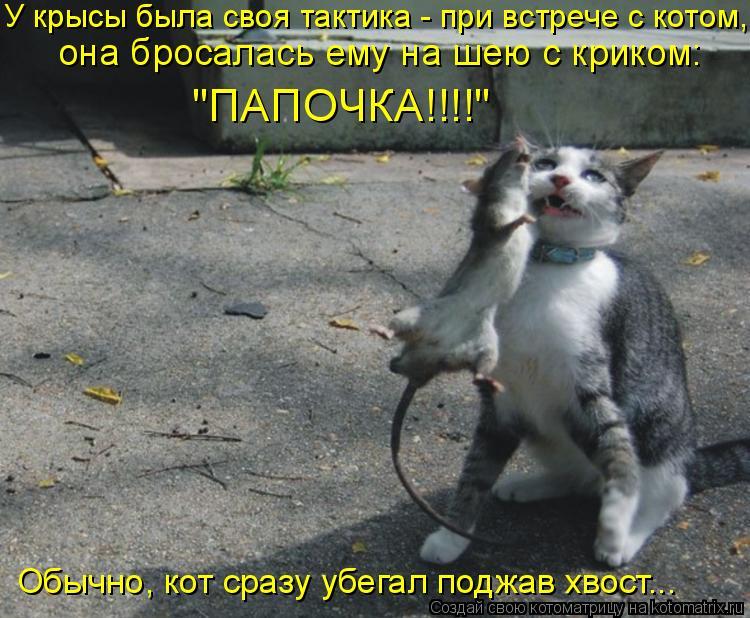 """Котоматрица: У крысы была своя тактика - при встрече с котом,  она бросалась ему на шею с криком:  """"ПАПОЧКА!!!!"""" Обычно, кот сразу убегал поджав хвост..."""