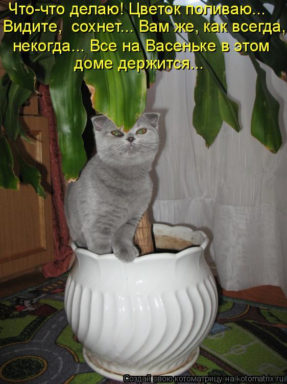 Котоматрица: Что-что делаю! Цветок поливаю…..  Видите,  сохнет….. Вам же, как всегда,  некогда….. Все на Васеньке в этом   доме держится…..