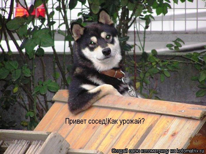 Котоматрица: Привет сосед!Как урожай?