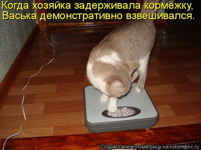 Котоматрица: Когда хозяйка задерживала кормёжку,  Васька демонстративно взвешивался.