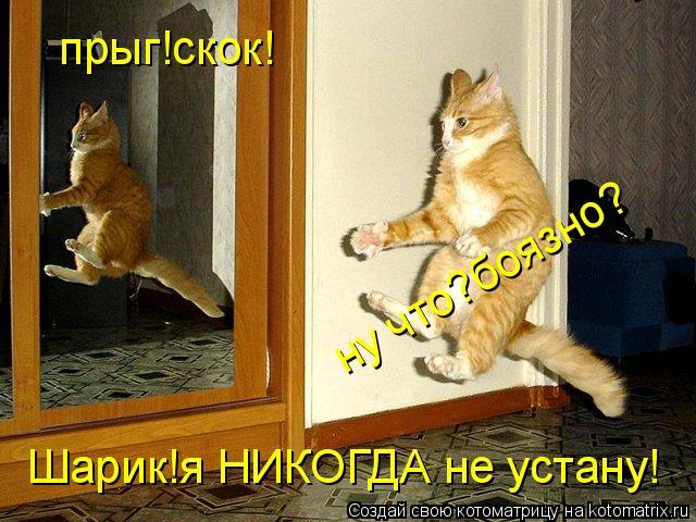 Котоматрица: прыг!скок! Шарик!я НИКОГДА не устану! ну что?боязно?