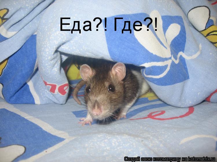 Котоматрица: Еда?! Где?!