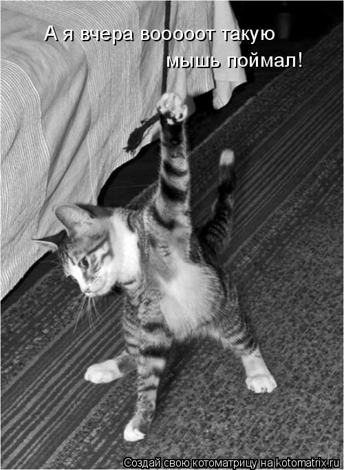 Котоматрица: А я вчера вооооот такую мышь поймал!