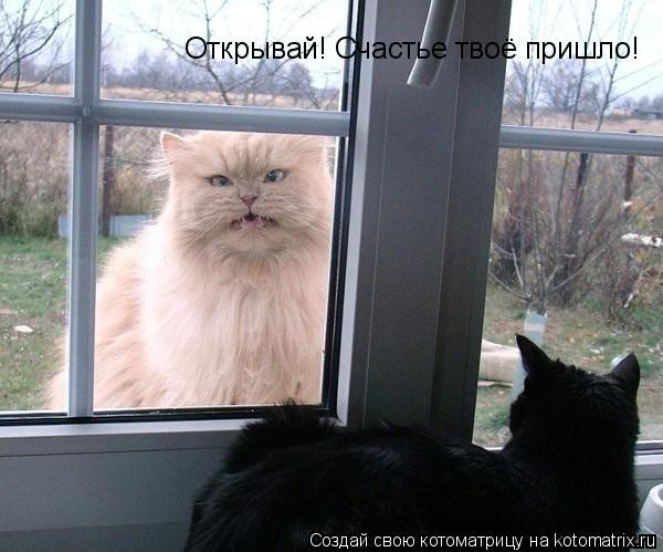 Котоматрица: Открывай! Счастье твоё пришло!