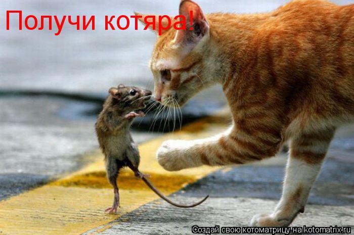 Котоматрица: Получи котяра!