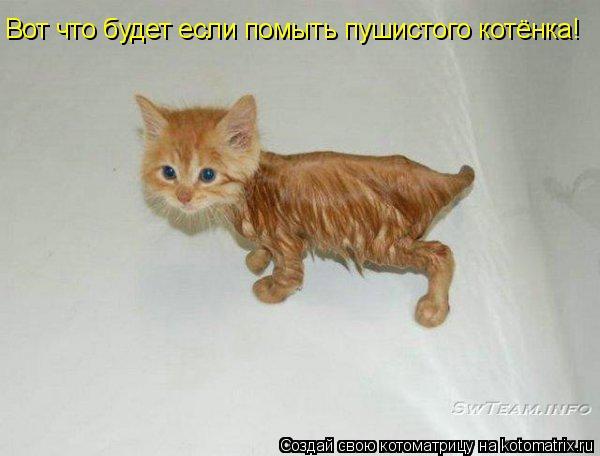 Котоматрица: Вот что будет если помыть пушистого котёнка!