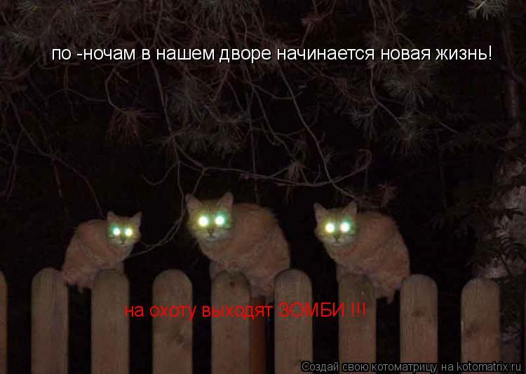 Котоматрица: по -ночам в нашем дворе начинается новая жизнь! на охоту выходят ЗОМБИ !!!
