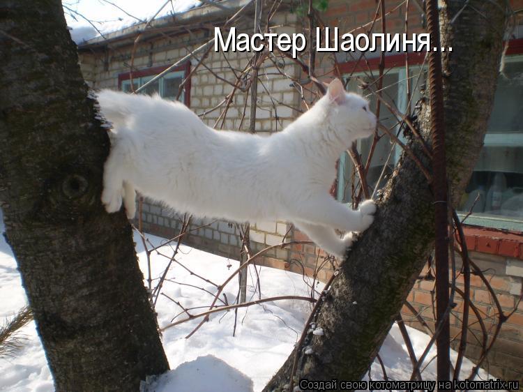Котоматрица: Мастер Шаолиня...