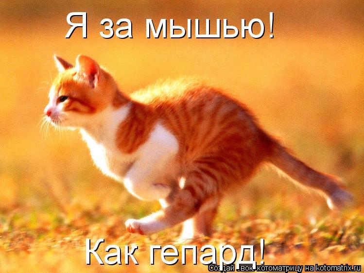 Котоматрица: Я за мышью! Как гепард!
