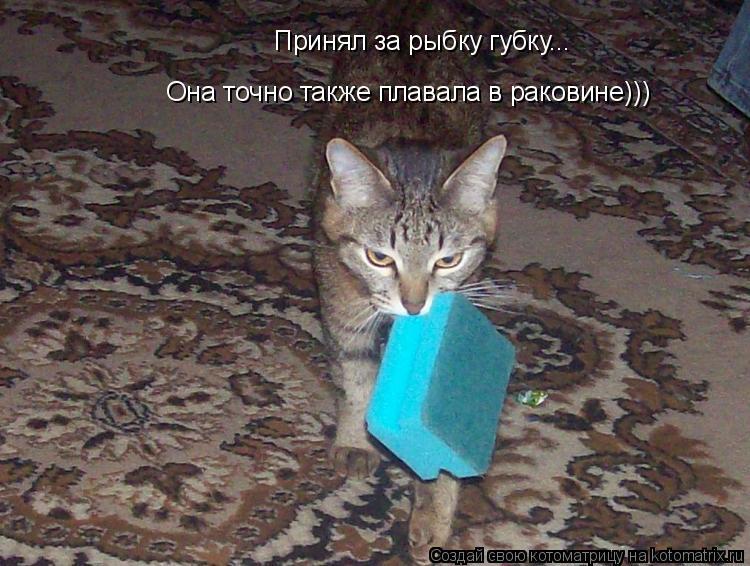 Котоматрица: Принял за рыбку губку... Она точно также плавала в раковине)))