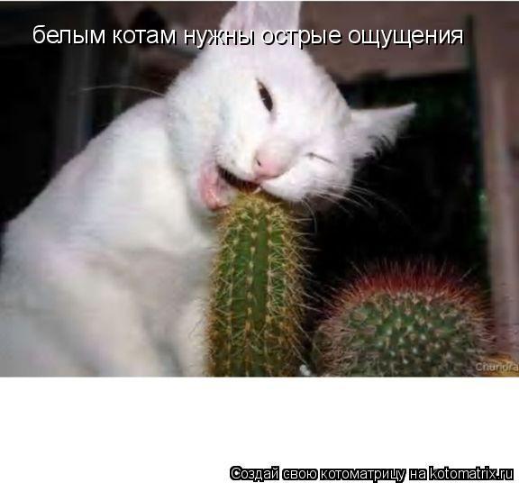 Котоматрица: белым котам нужны острые ощущения