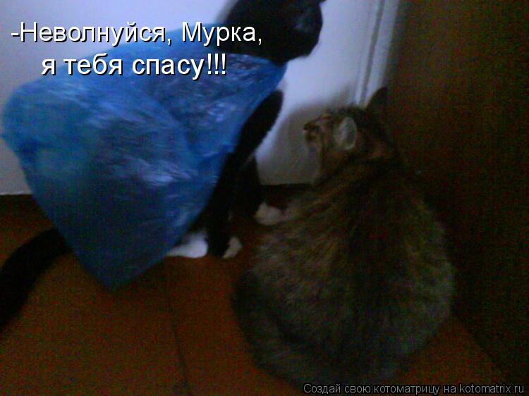 Котоматрица: -Неволнуйся, Мурка, я тебя спасу!!!
