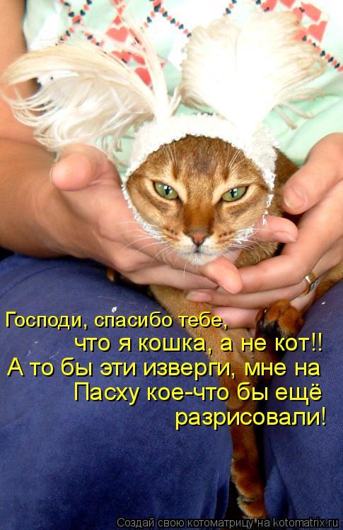 Котоматрица: Господи, спасибо тебе,  что я кошка, а не кот!! А то бы эти изверги, мне на Пасху кое-что бы ещё разрисовали!