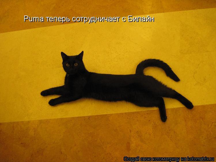 Котоматрица: Puma теперь сотрудничает с Билайн