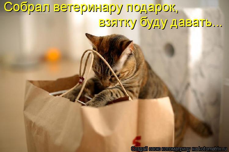 Котоматрица: Собрал ветеринару подарок,  взятку буду давать...
