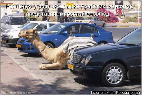 Котоматрица: Реальную угрозу экономике Арабских Эмиратов представляет простой верблюд.