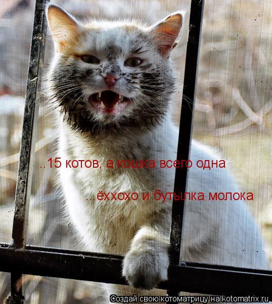 Котоматрица: ..15 котов, а кошка всего одна... ёххохо и бутылка молока.. ..15 котов, а кошка всего одна ...ёххохо и бутылка молока