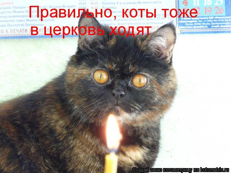 Котоматрица: Правильно, коты тоже  в церковь ходят