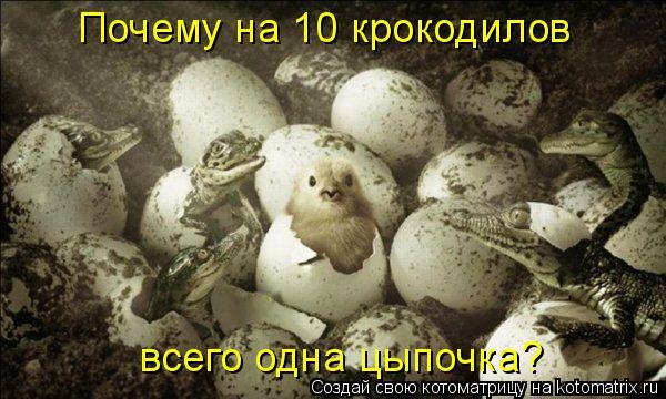 Котоматрица: Почему на 10 крокодилов всего одна цыпочка?