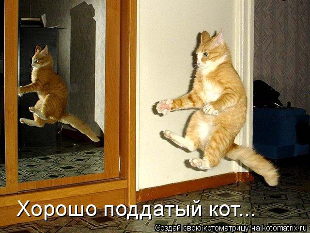 Котоматрица: Хорошо поддатый кот...