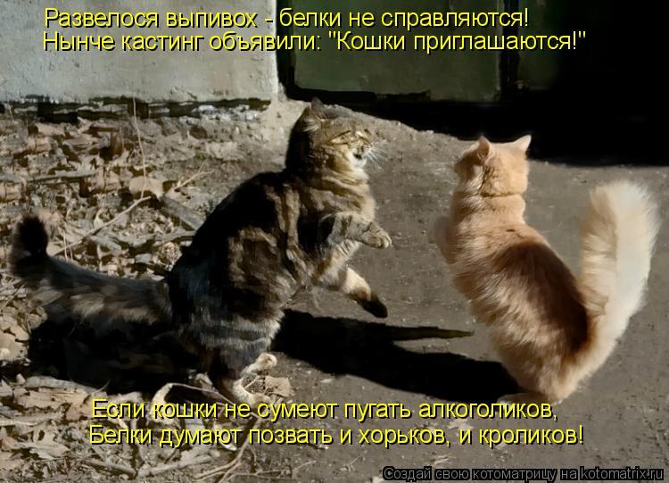 """Котоматрица: Развелося выпивох - белки не справляются! Нынче кастинг объявили: """"Кошки приглашаются!"""" Если кошки не сумеют пугать алкоголиков, Белки думаю"""