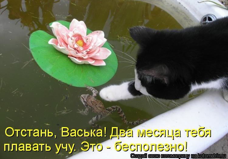 Котоматрица: Отстань, Васька! Два месяца тебя плавать учу. Это - бесполезно!