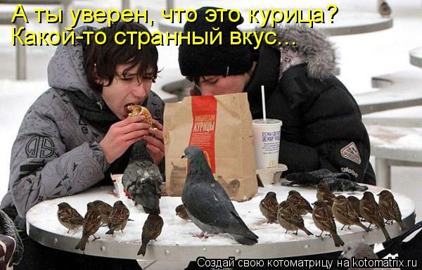 Котоматрица: А ты уверен, что это курица? Какой-то странный вкус...