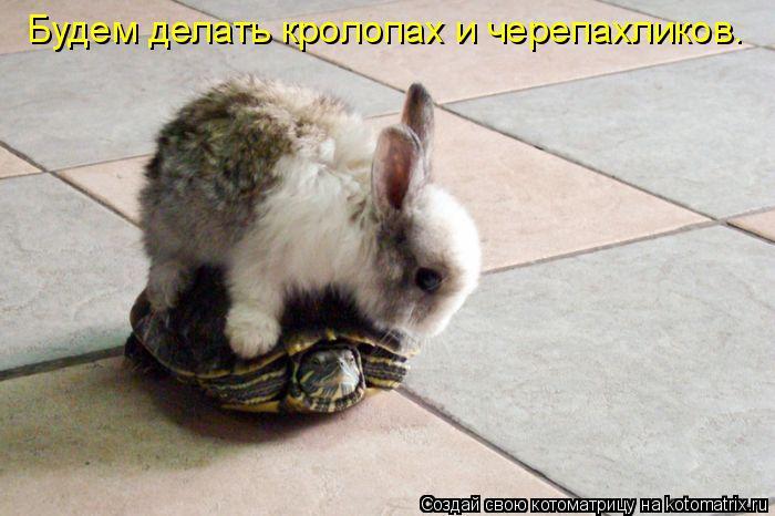Котоматрица: Будем делать кролопах и черепахликов.